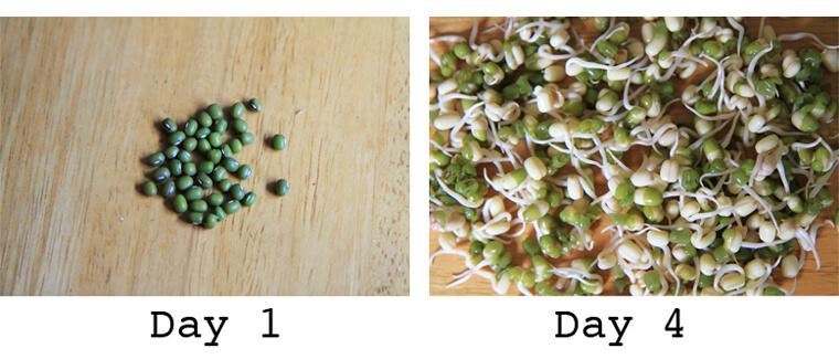 sprouting-progress